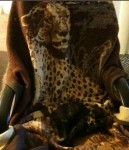 Kiki on a Cheetah Blanket