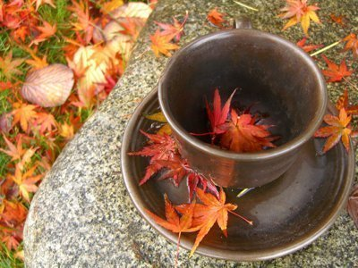 tea cup with fall leaves