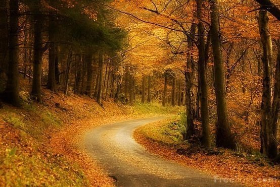 path in the fall woods